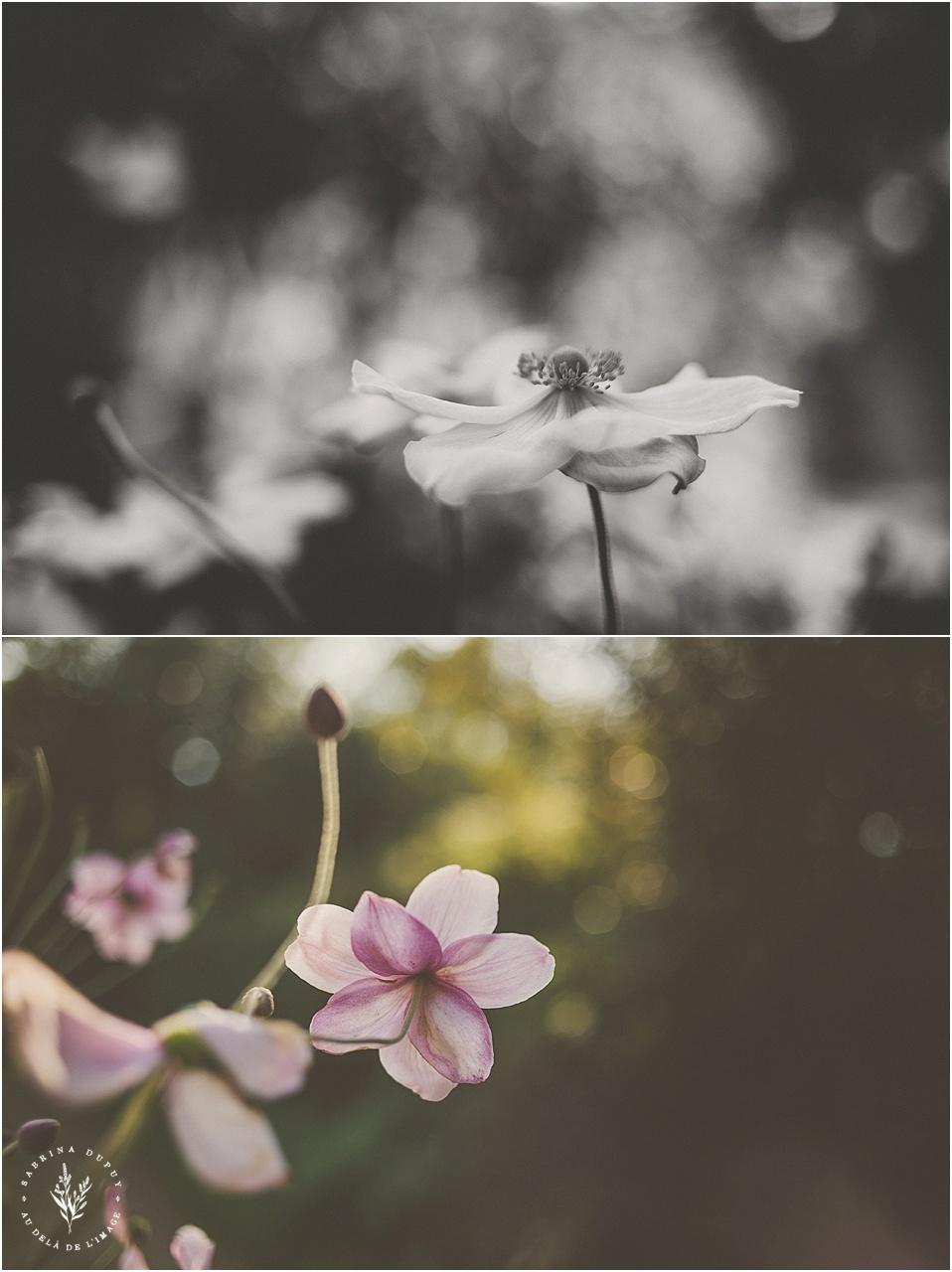 photos-bretagne_0011