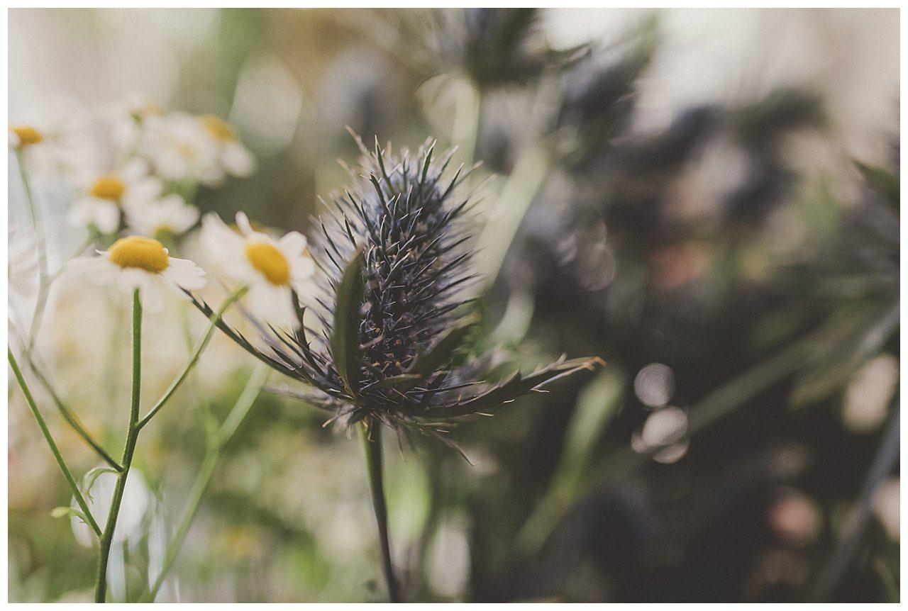 reportage-fleuriste-comme-un-reve-finistere_0001